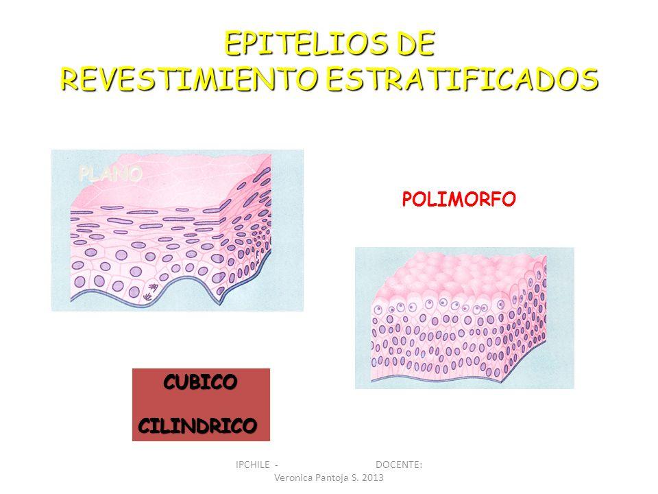 EPITELIOS DE REVESTIMIENTO ESTRATIFICADOS PLANO POLIMORFO CUBICOCILINDRICO IPCHILE - DOCENTE: Veronica Pantoja S. 2013