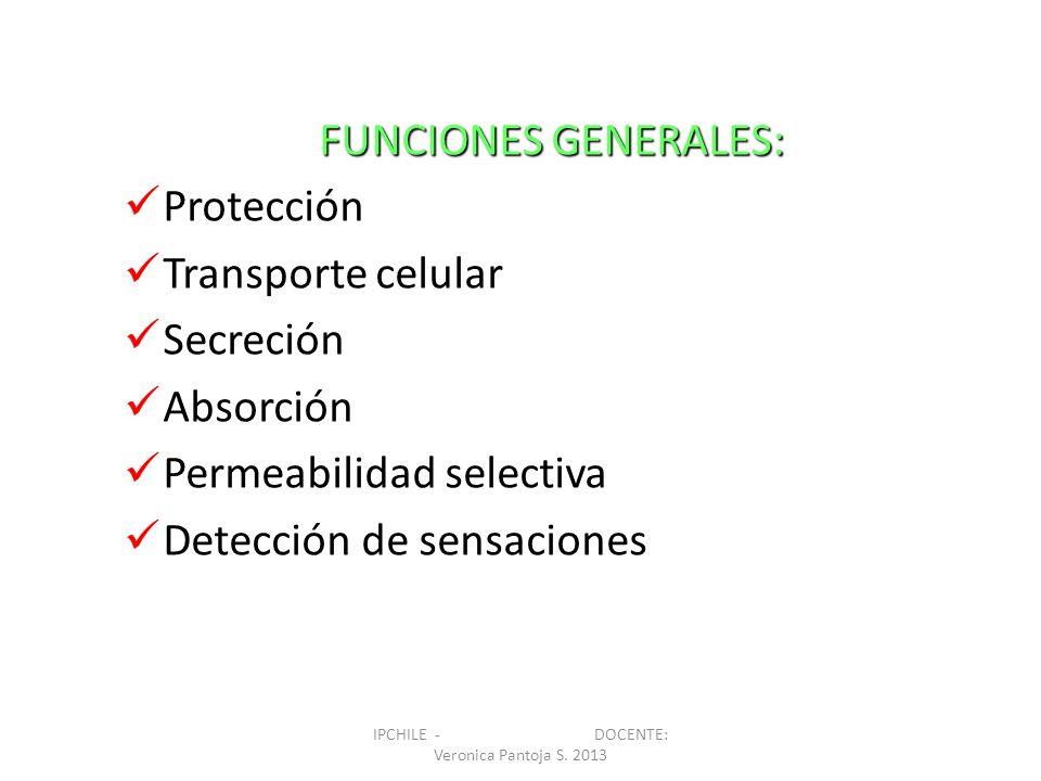 FUNCIONES GENERALES: Protección Transporte celular Secreción Absorción Permeabilidad selectiva Detección de sensaciones IPCHILE - DOCENTE: Veronica Pa