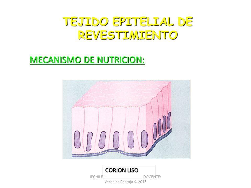 TEJIDO EPITELIAL DE REVESTIMIENTO MECANISMO DE NUTRICION: CORION LISO IPCHILE - DOCENTE: Veronica Pantoja S. 2013