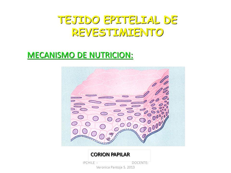 TEJIDO EPITELIAL DE REVESTIMIENTO MECANISMO DE NUTRICION: CORION PAPILAR IPCHILE - DOCENTE: Veronica Pantoja S. 2013