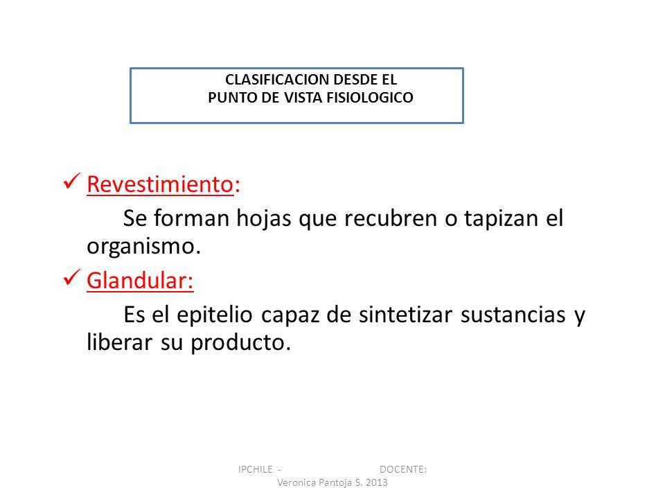 POLARIDAD CELULAR v REGIÓN APICAL REGION LATERAL REGION BASAL MEMBRANA BASAL IPCHILE - DOCENTE: Veronica Pantoja S.