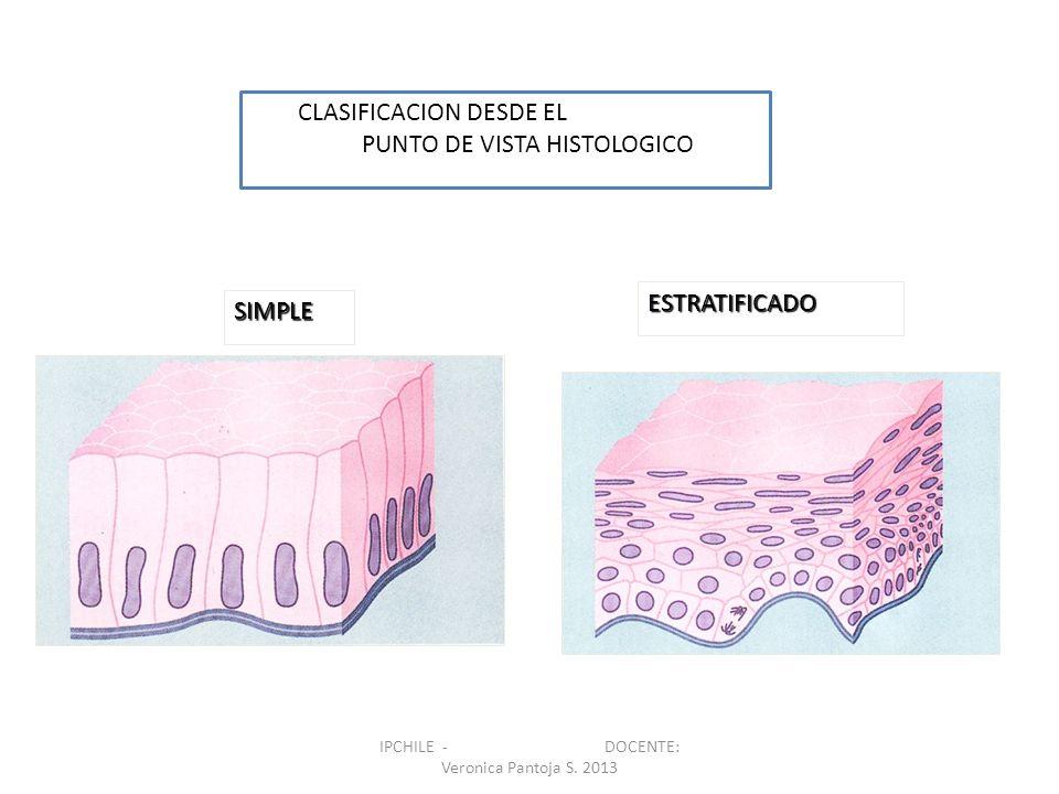 SIMPLE ESTRATIFICADO CLASIFICACION DESDE EL PUNTO DE VISTA HISTOLOGICO IPCHILE - DOCENTE: Veronica Pantoja S. 2013