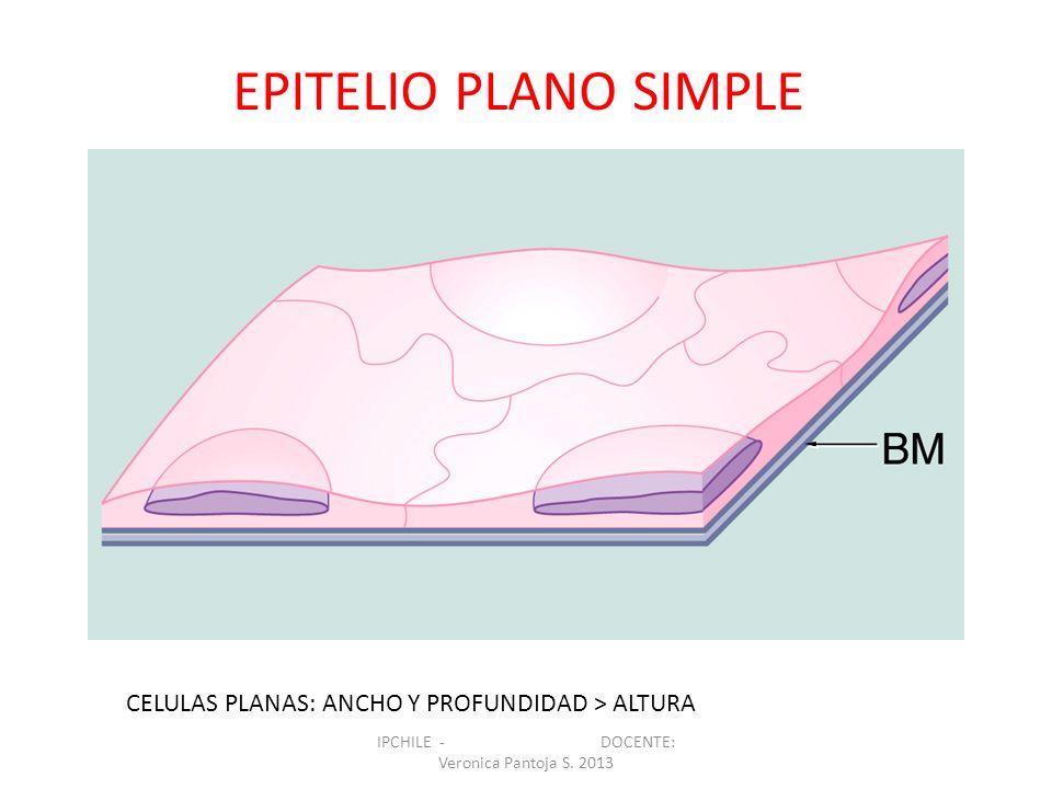 CELULAS PLANAS: ANCHO Y PROFUNDIDAD > ALTURA EPITELIO PLANO SIMPLE IPCHILE - DOCENTE: Veronica Pantoja S. 2013
