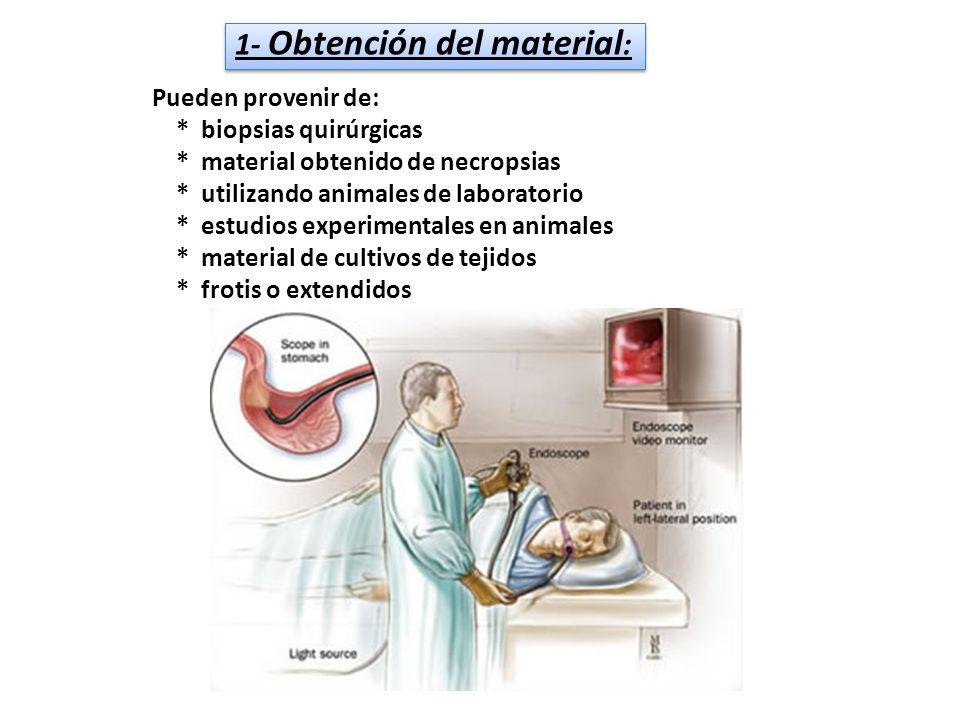 Pueden provenir de: * biopsias quirúrgicas * material obtenido de necropsias * utilizando animales de laboratorio * estudios experimentales en animale