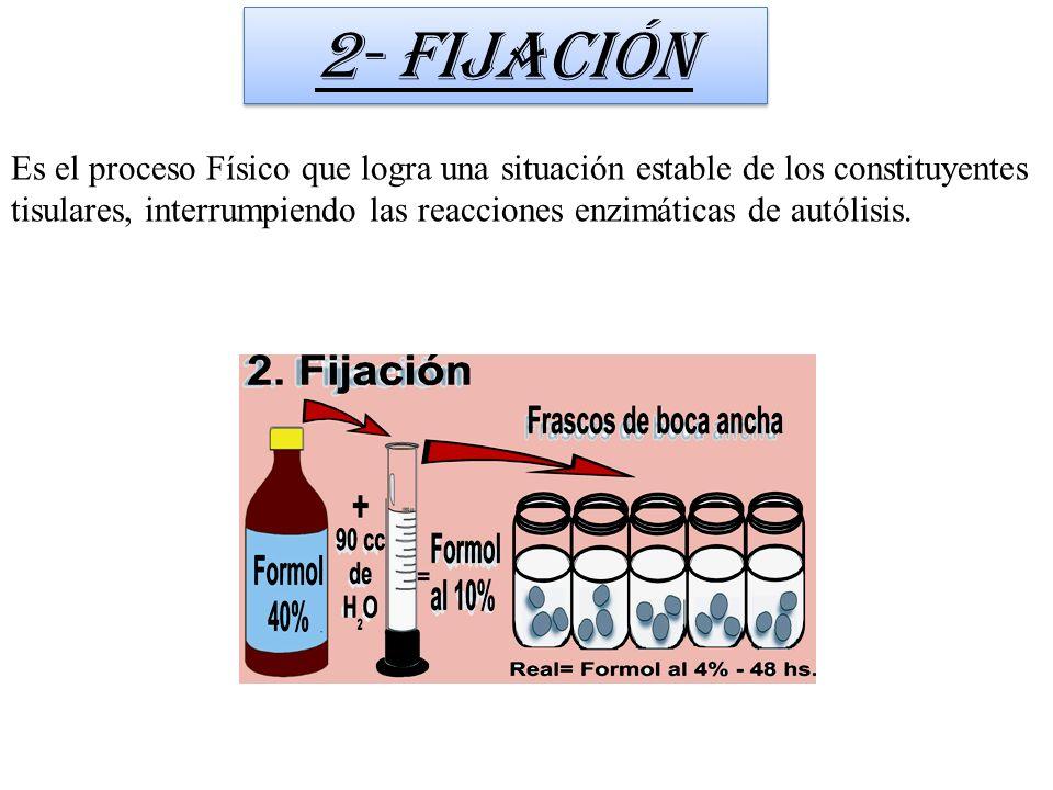 Es el proceso Físico que logra una situación estable de los constituyentes tisulares, interrumpiendo las reacciones enzimáticas de autólisis. 2- Fijac