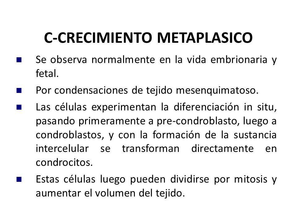 C-CRECIMIENTO METAPLASICO Se observa normalmente en la vida embrionaria y fetal. Por condensaciones de tejido mesenquimatoso. Las células experimentan