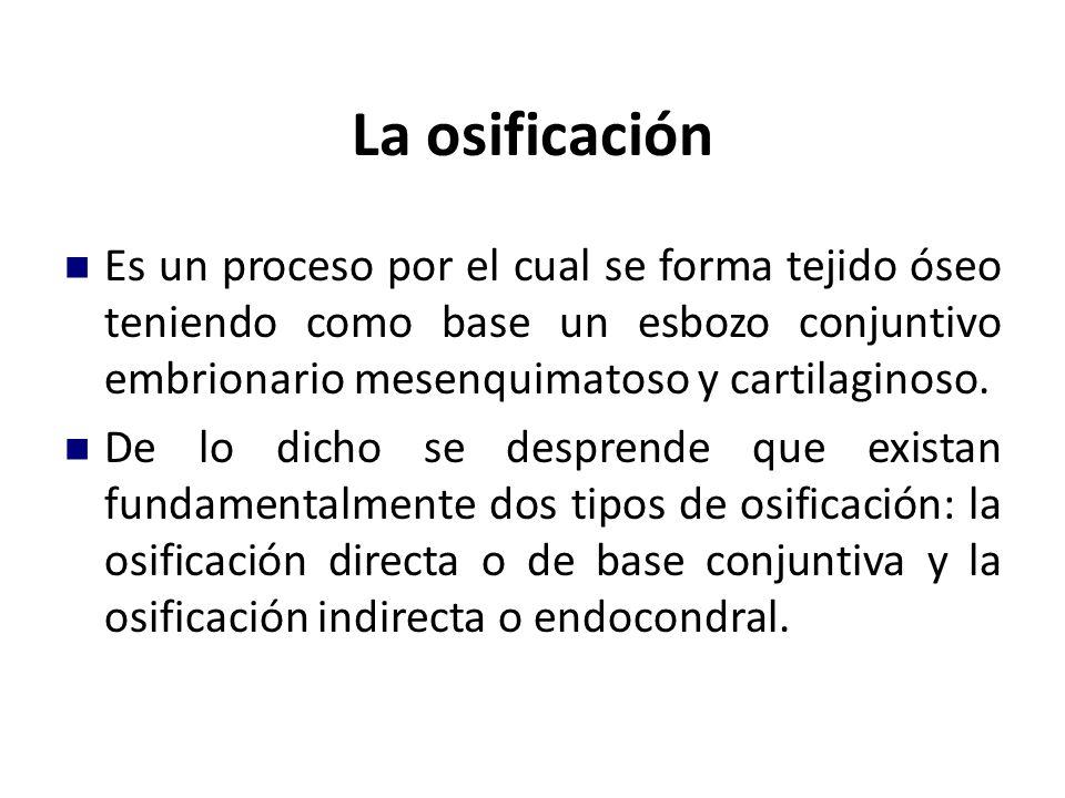 La osificación Es un proceso por el cual se forma tejido óseo teniendo como base un esbozo conjuntivo embrionario mesenquimatoso y cartilaginoso. De l