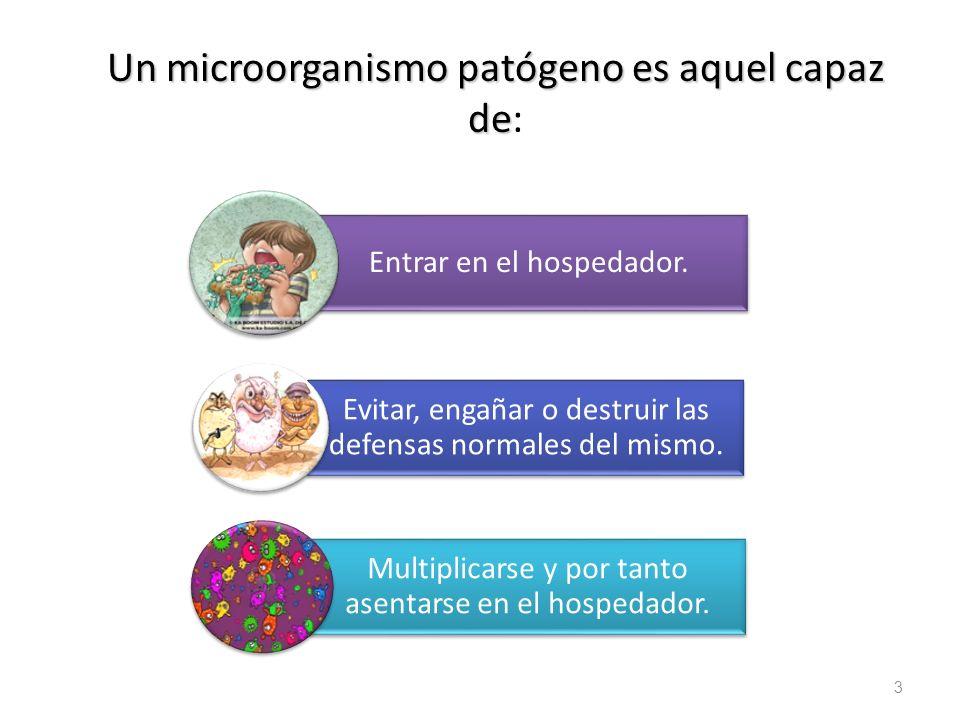 14 bacterianas