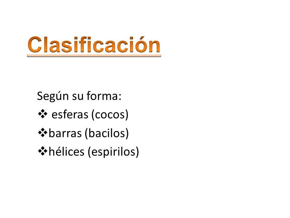 Según su forma: esferas (cocos) barras (bacilos) hélices (espirilos)
