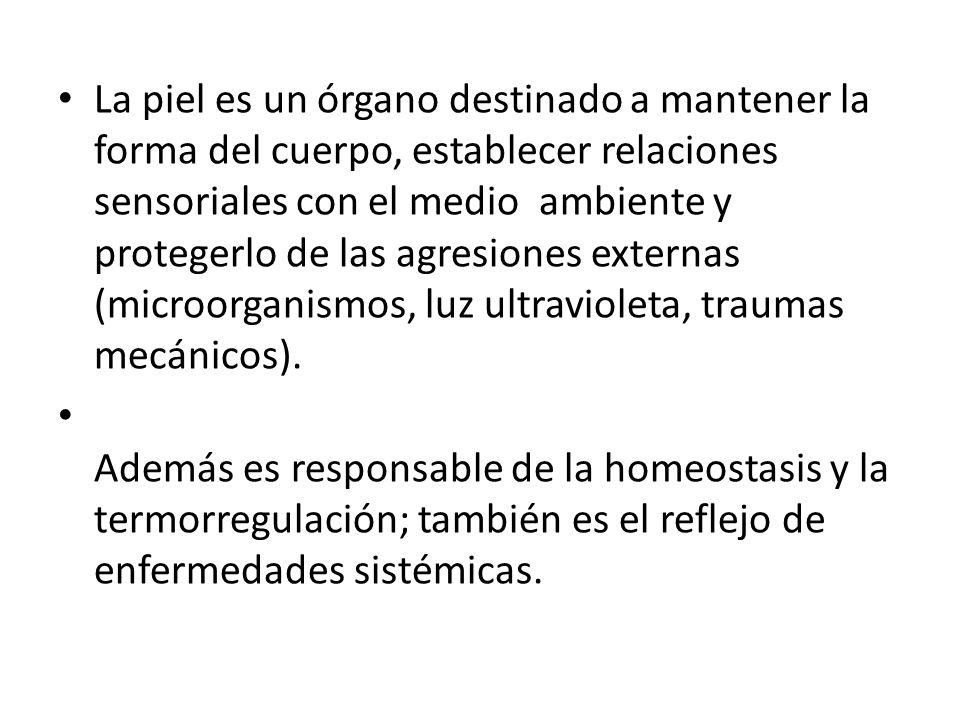 Unión Dermoepidermica Lámina Basal Separa la epidermis del dermis.