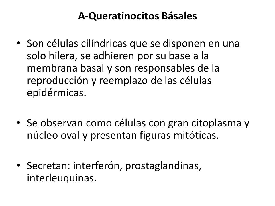 B-Melanocitos Son células ovoides, de citoplasma claro, núcleo pequeño (bien teñido) y provistos de prolongaciones largas o dendritas.