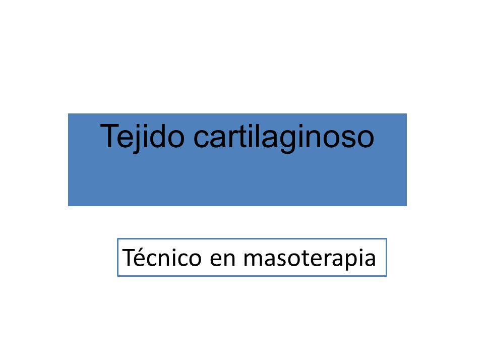 Tejido cartilaginoso Técnico en masoterapia