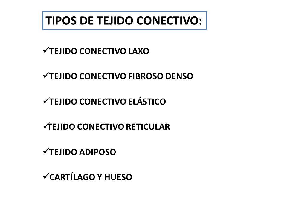 TEJIDO CONECTIVO LAXO TEJIDO CONECTIVO FIBROSO DENSO TEJIDO CONECTIVO ELÁSTICO TEJIDO CONECTIVO RETICULAR TEJIDO ADIPOSO CARTÍLAGO Y HUESO TIPOS DE TE