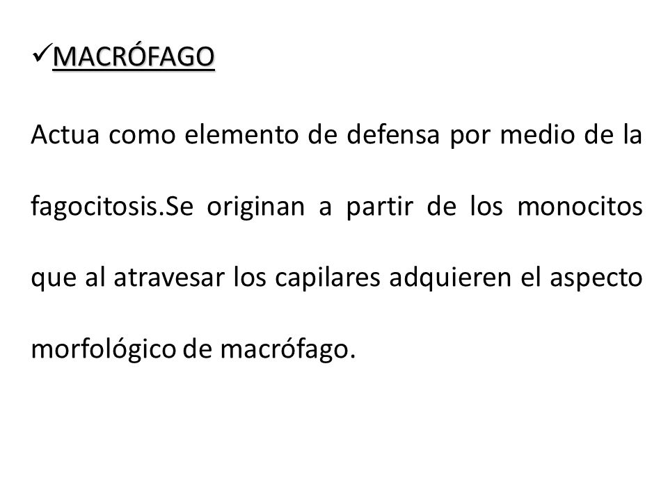 MACRÓFAGO Actua como elemento de defensa por medio de la fagocitosis.Se originan a partir de los monocitos que al atravesar los capilares adquieren el