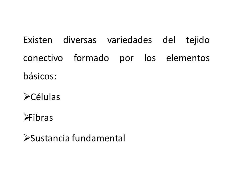 Existen diversas variedades del tejido conectivo formado por los elementos básicos: Células Fibras Sustancia fundamental