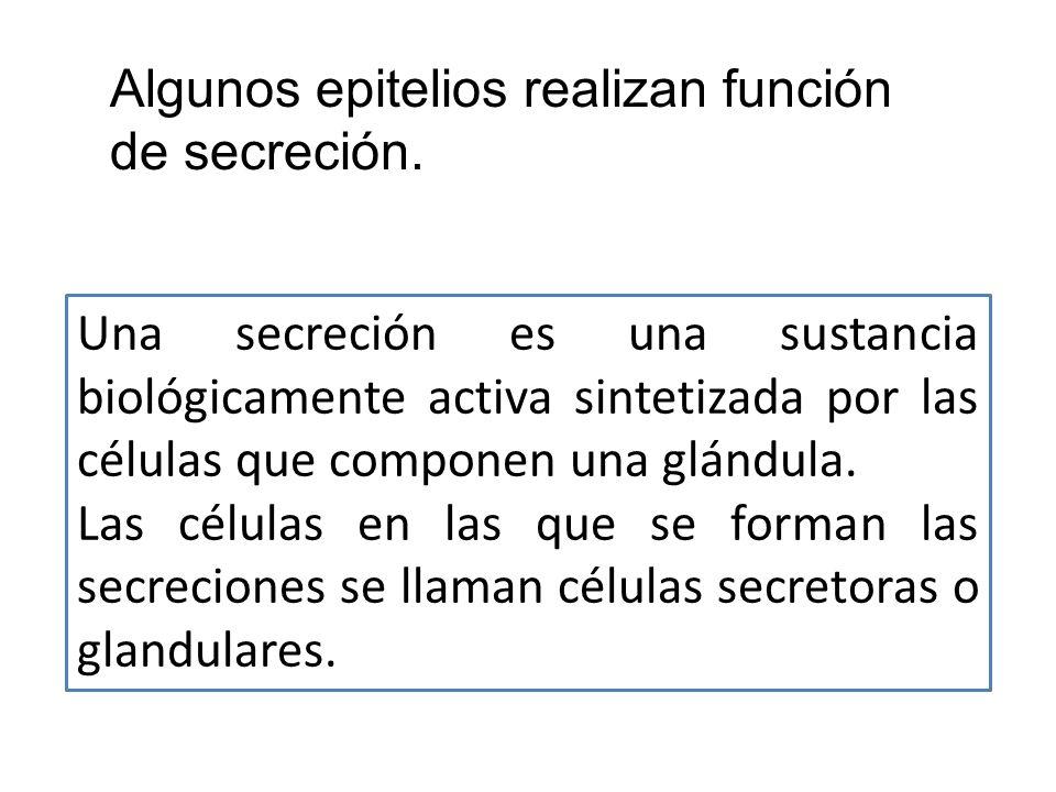 Una secreción es una sustancia biológicamente activa sintetizada por las células que componen una glándula. Las células en las que se forman las secre