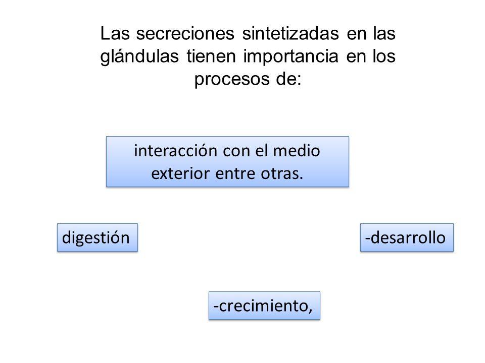 Las secreciones sintetizadas en las glándulas tienen importancia en los procesos de: digestión -crecimiento, -desarrollo interacción con el medio exte