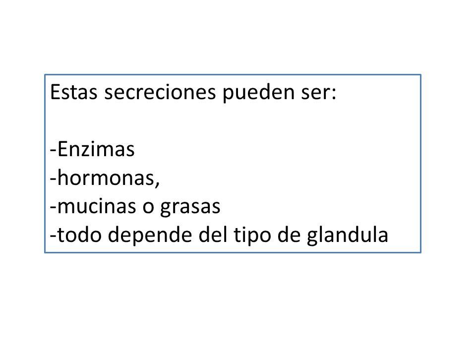 Estas secreciones pueden ser: -Enzimas -hormonas, -mucinas o grasas -todo depende del tipo de glandula