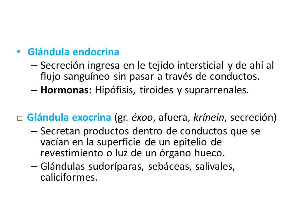 Glándula endocrina – Secreción ingresa en le tejido intersticial y de ahí al flujo sanguíneo sin pasar a través de conductos. – Hormonas: Hipófisis, t