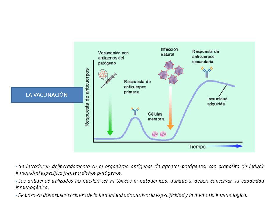 Se introducen deliberadamente en el organismo antígenos de agentes patógenos, con propósito de inducir inmunidad específica frente a dichos patógenos.