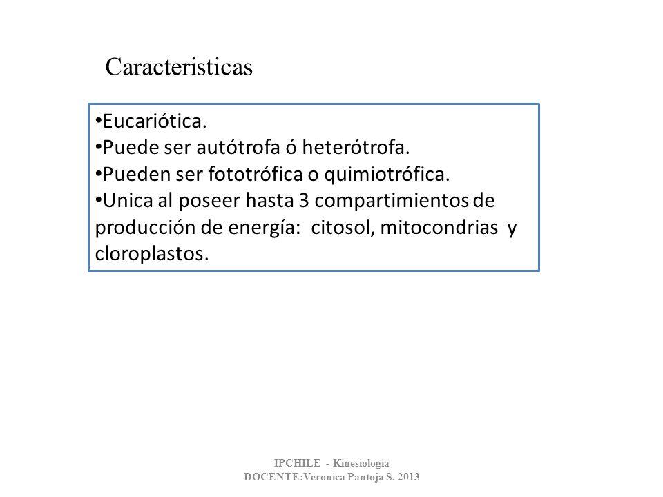 PARED CELULAR VEGETAL IPCHILE - Kinesiologia DOCENTE:Veronica Pantoja S. 2013