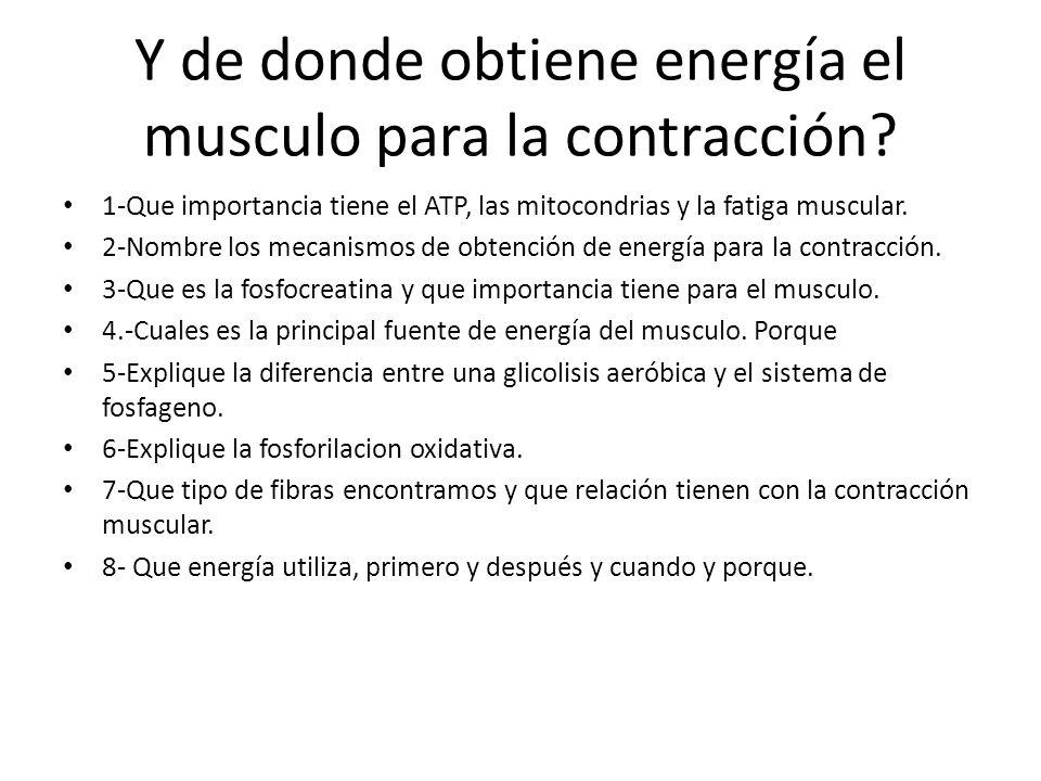 Y de donde obtiene energía el musculo para la contracción? 1-Que importancia tiene el ATP, las mitocondrias y la fatiga muscular. 2-Nombre los mecanis