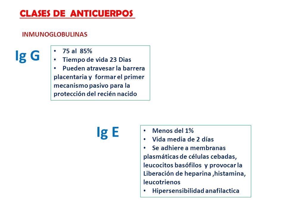 CLASES DE ANTICUERPOS INMUNOGLOBULINAS Ig G 75 al 85% Tiempo de vida 23 Dias Pueden atravesar la barrera placentaria y formar el primer mecanismo pasi