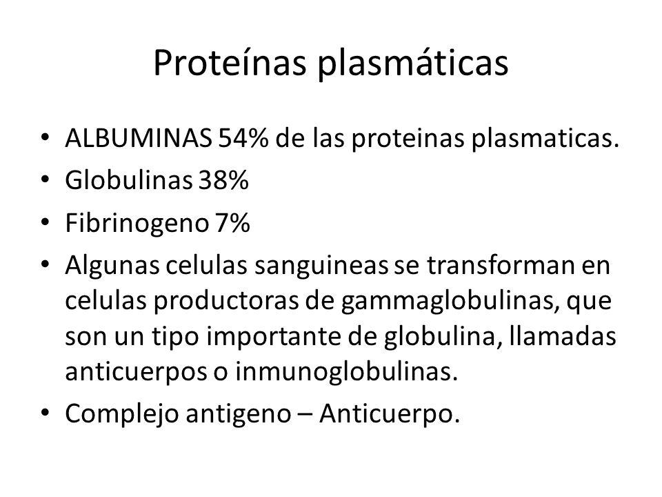 ALBUMINAS 54% de las proteinas plasmaticas. Globulinas 38% Fibrinogeno 7% Algunas celulas sanguineas se transforman en celulas productoras de gammaglo