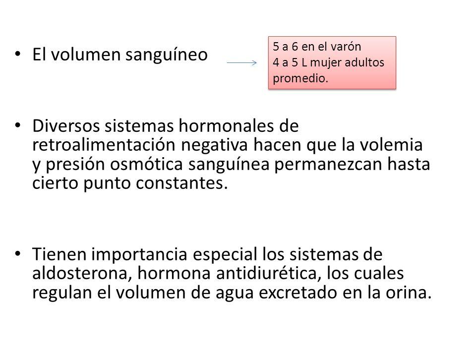 Las celulas madres hemopoyeticas tambièn se diferencian en celulas productoras de plaquetas.