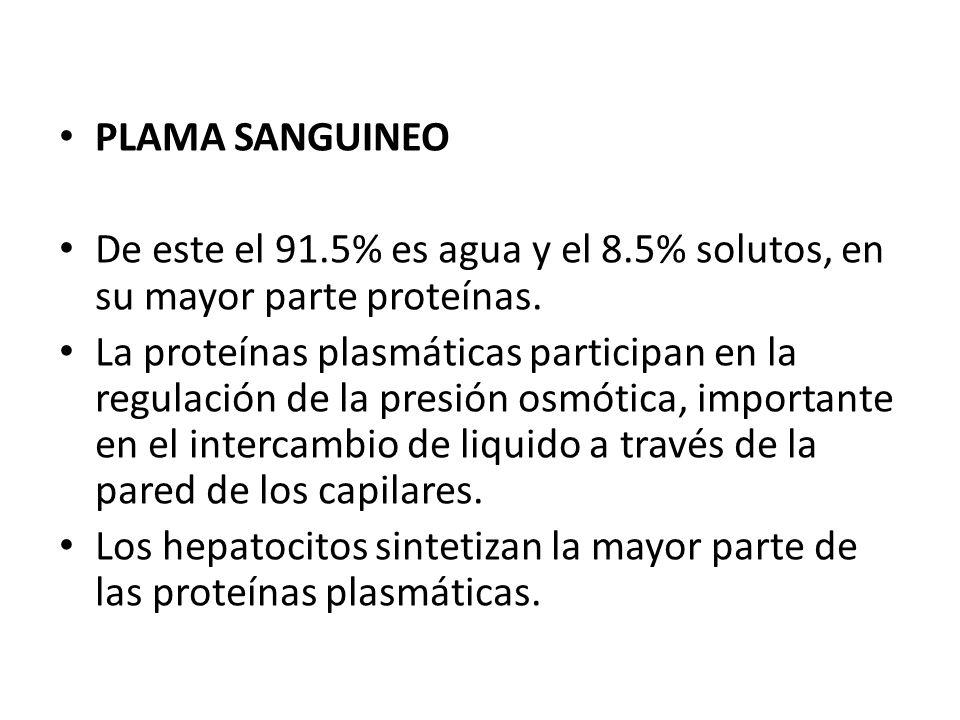 PLAMA SANGUINEO De este el 91.5% es agua y el 8.5% solutos, en su mayor parte proteínas. La proteínas plasmáticas participan en la regulación de la pr