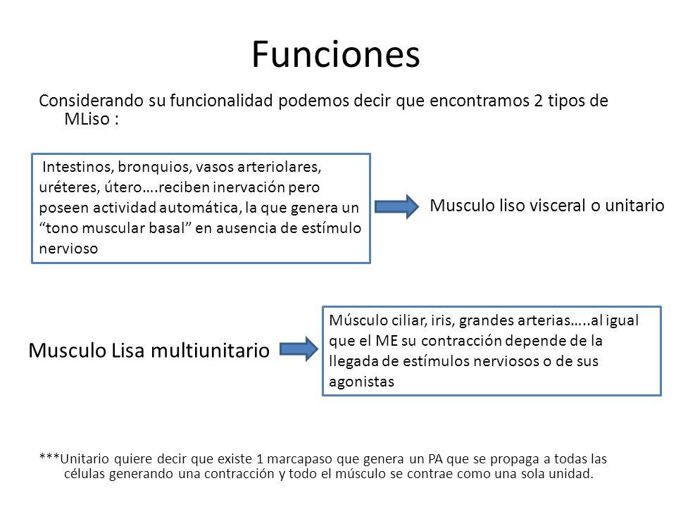 Funciones Considerando su funcionalidad podemos decir que encontramos 2 tipos de MLiso : ***Unitario quiere decir que existe 1 marcapaso que genera un