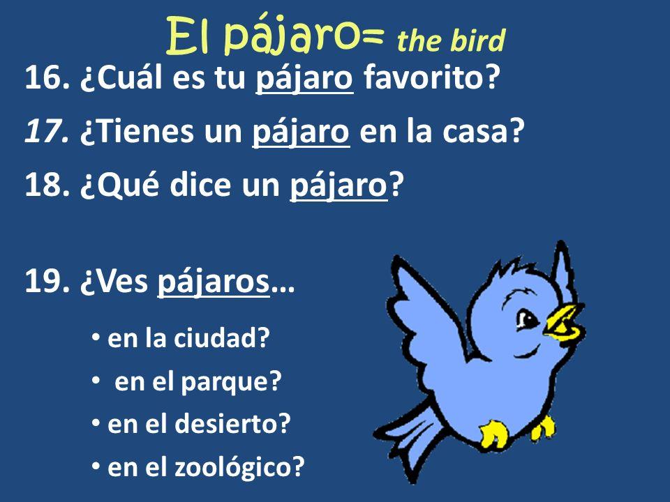El pájaro= the bird 16. ¿Cuál es tu pájaro favorito? 17. ¿Tienes un pájaro en la casa? 18. ¿Qué dice un pájaro? 19. ¿Ves pájaros… en la ciudad? en el
