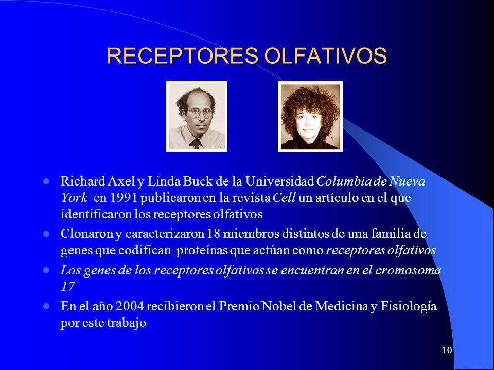 10 RECEPTORES OLFATIVOS Richard Axel y Linda Buck de la Universidad Columbia de Nueva York en 1991 publicaron en la revista Cell un artículo en el que