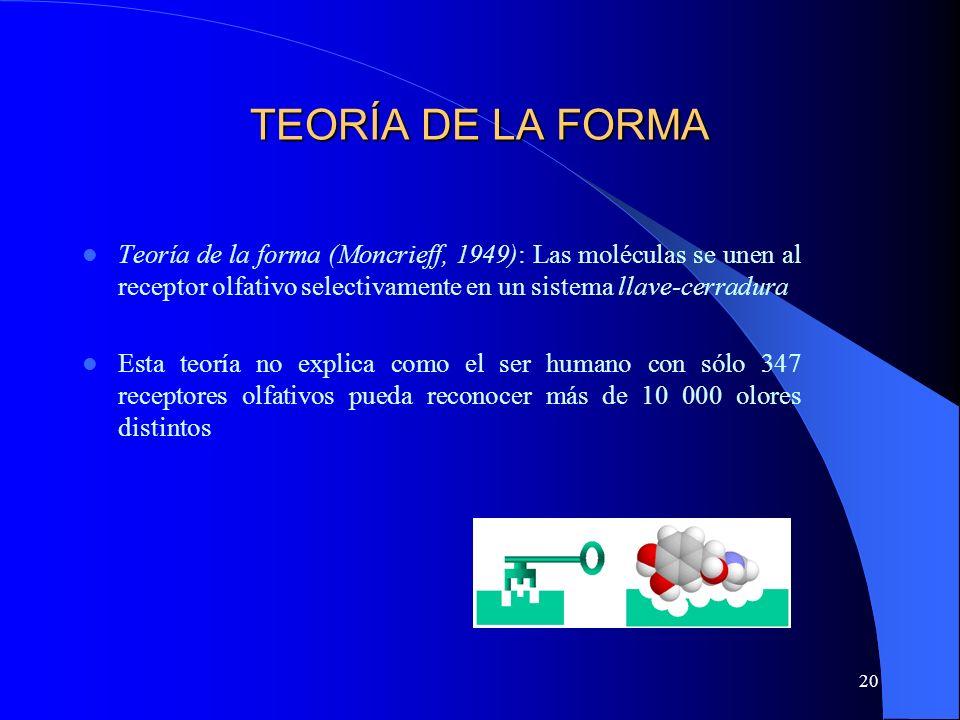 20 TEORÍA DE LA FORMA Teoría de la forma (Moncrieff, 1949): Las moléculas se unen al receptor olfativo selectivamente en un sistema llave-cerradura Es