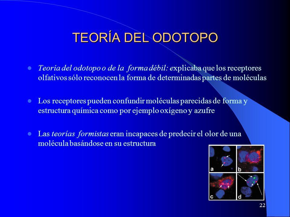 22 TEORÍA DEL ODOTOPO Teoría del odotopo o de la forma débil: explicaba que los receptores olfativos sólo reconocen la forma de determinadas partes de