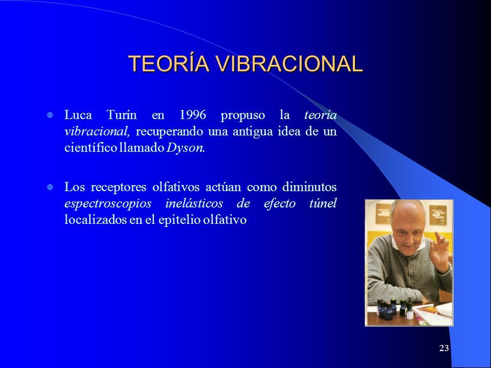 23 TEORÍA VIBRACIONAL Luca Turín en 1996 propuso la teoría vibracional, recuperando una antigua idea de un científico llamado Dyson. Los receptores ol