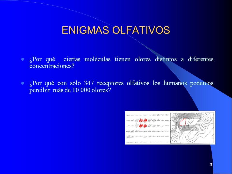 3 ENIGMAS OLFATIVOS ¿Por qué ciertas moléculas tienen olores distintos a diferentes concentraciones? ¿Por qué con sólo 347 receptores olfativos los hu