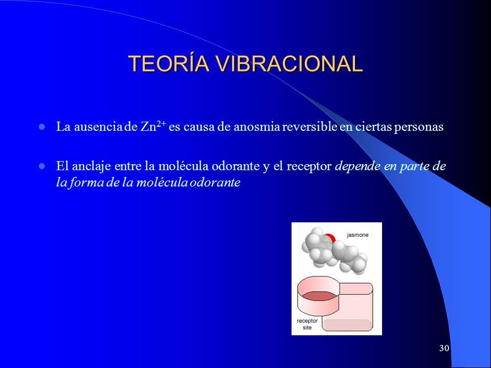 30 TEORÍA VIBRACIONAL La ausencia de Zn 2+ es causa de anosmia reversible en ciertas personas El anclaje entre la molécula odorante y el receptor depe
