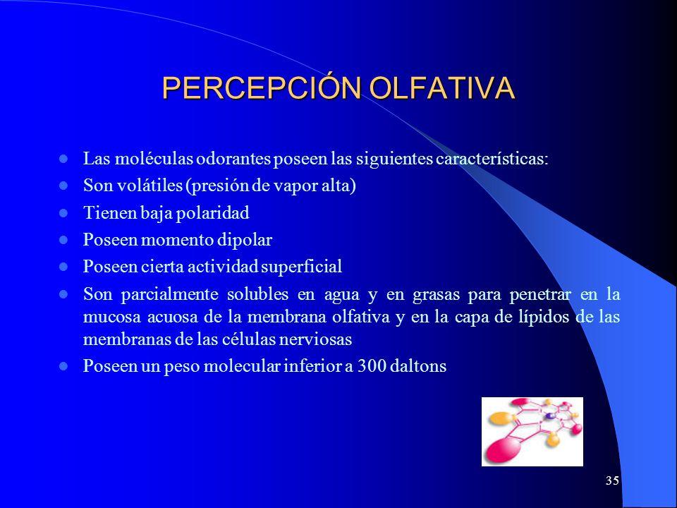35 PERCEPCIÓN OLFATIVA Las moléculas odorantes poseen las siguientes características: Son volátiles (presión de vapor alta) Tienen baja polaridad Pose