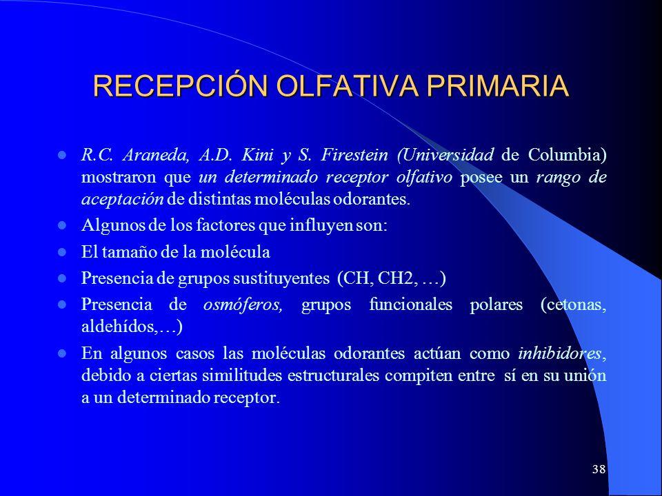38 RECEPCIÓN OLFATIVA PRIMARIA R.C. Araneda, A.D. Kini y S. Firestein (Universidad de Columbia) mostraron que un determinado receptor olfativo posee u