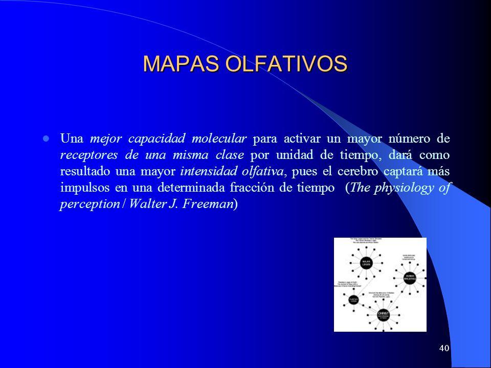 40 MAPAS OLFATIVOS Una mejor capacidad molecular para activar un mayor número de receptores de una misma clase por unidad de tiempo, dará como resulta