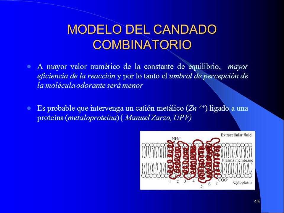 45 MODELO DEL CANDADO COMBINATORIO A mayor valor numérico de la constante de equilibrio, mayor eficiencia de la reacción y por lo tanto el umbral de p