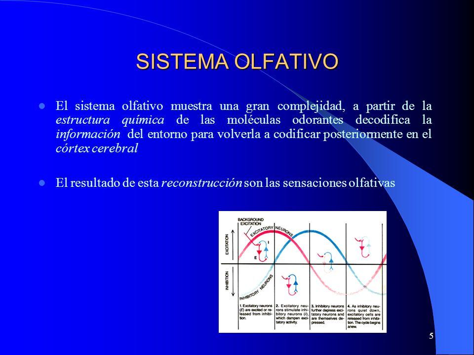 5 SISTEMA OLFATIVO El sistema olfativo muestra una gran complejidad, a partir de la estructura química de las moléculas odorantes decodifica la inform