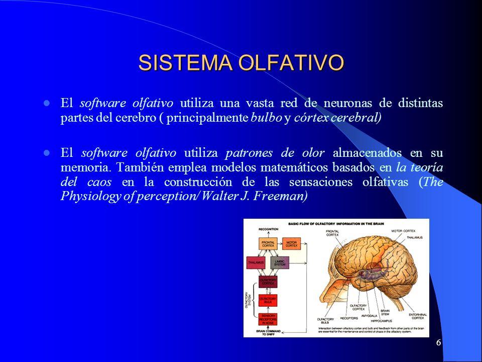 6 SISTEMA OLFATIVO El software olfativo utiliza una vasta red de neuronas de distintas partes del cerebro ( principalmente bulbo y córtex cerebral) El