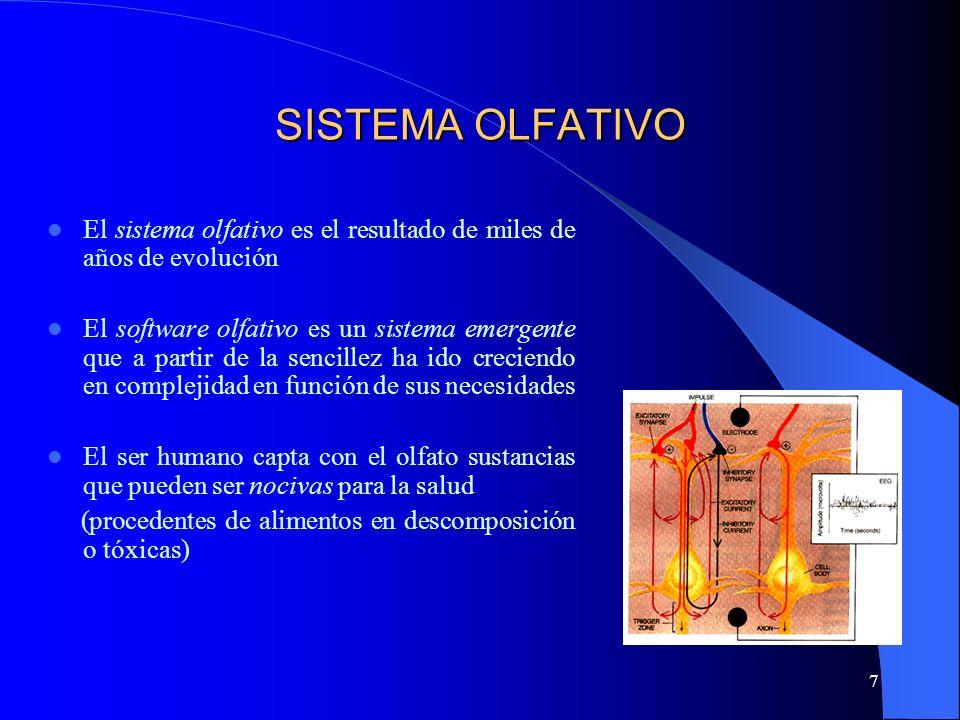 7 SISTEMA OLFATIVO El sistema olfativo es el resultado de miles de años de evolución El software olfativo es un sistema emergente que a partir de la s