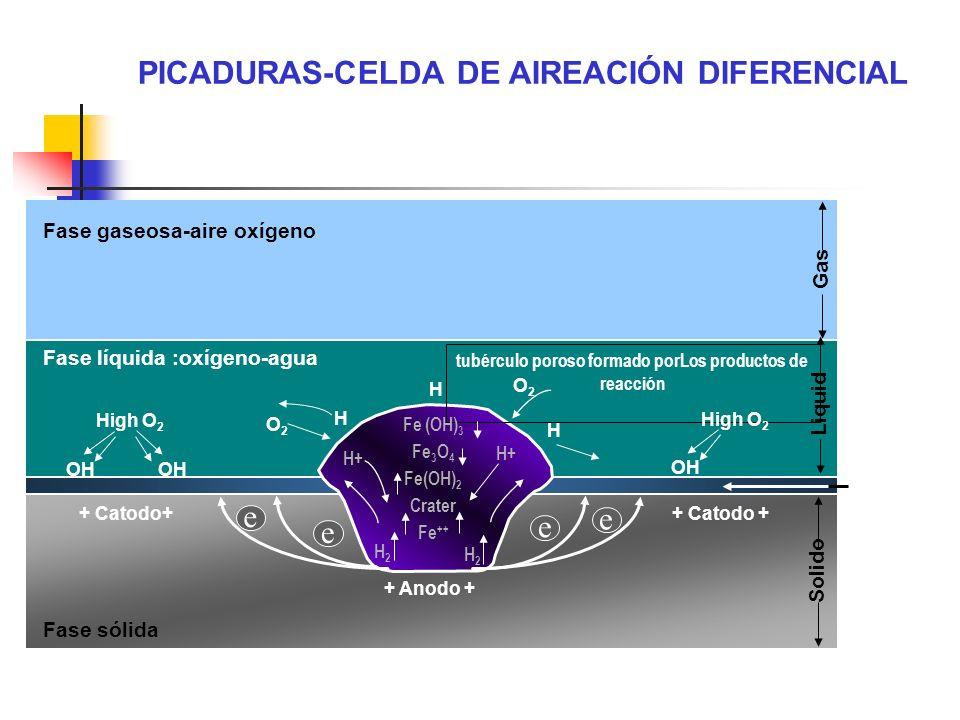 Fase gaseosa-aire oxígeno Fase líquida :oxígeno-agua + Catodo+ High O 2 OH Fase sólida Gas Liquid Solido + Catodo + + Anodo + e e e e H H O2O2 tubércu