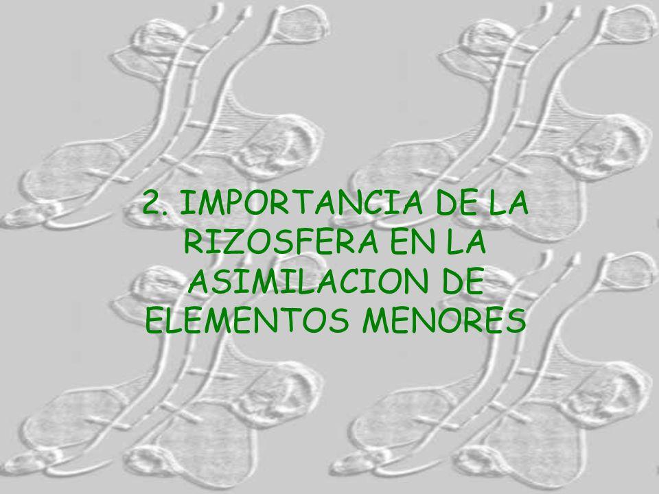 2. IMPORTANCIA DE LA RIZOSFERA EN LA ASIMILACION DE ELEMENTOS MENORES
