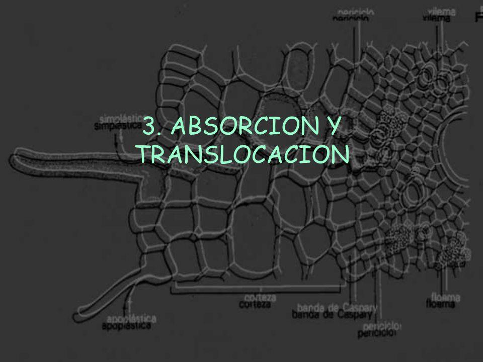 3. ABSORCION Y TRANSLOCACION