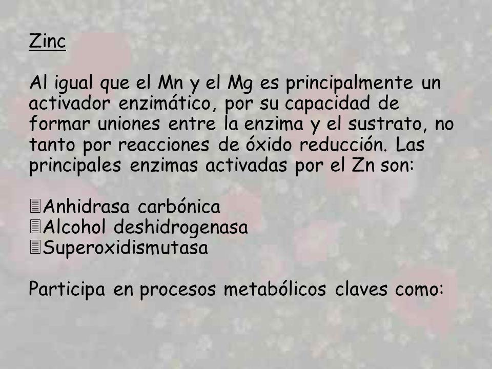 Zinc Al igual que el Mn y el Mg es principalmente un activador enzimático, por su capacidad de formar uniones entre la enzima y el sustrato, no tanto