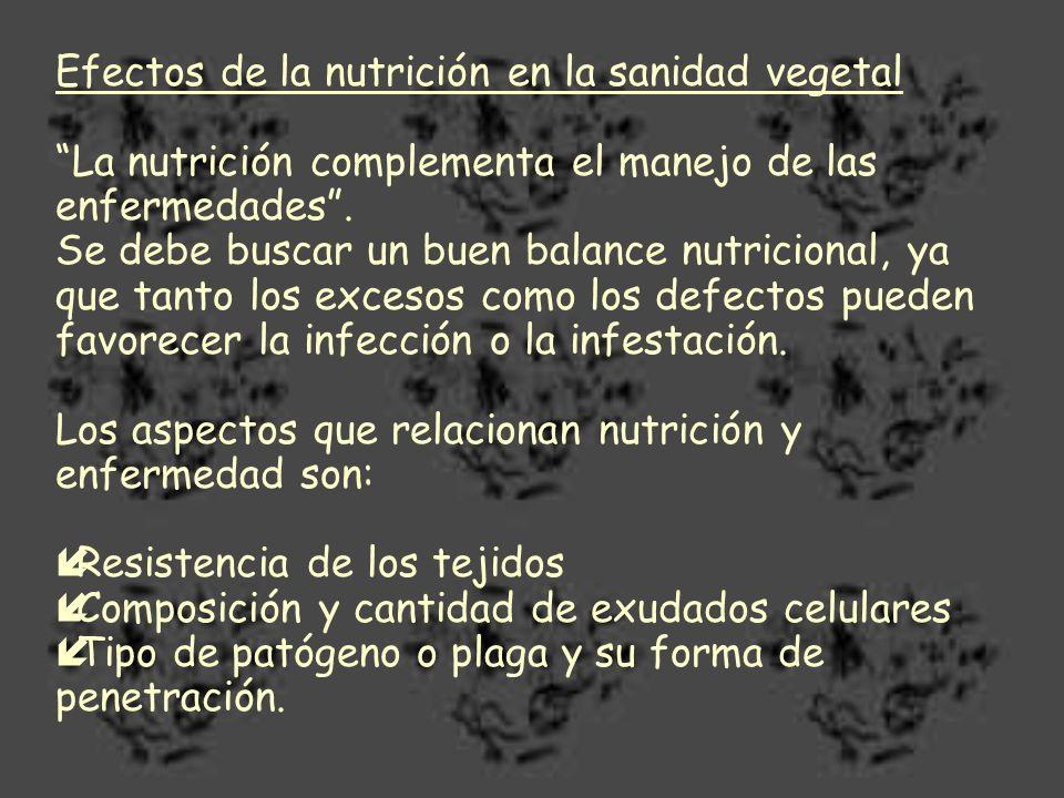 Efectos de la nutrición en la sanidad vegetal La nutrición complementa el manejo de las enfermedades. Se debe buscar un buen balance nutricional, ya q